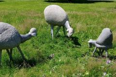 SHEEP, 1968